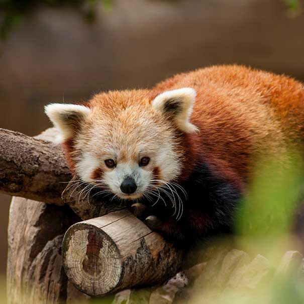 Summer at Marwell Zoo